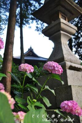 11惣河内_9623