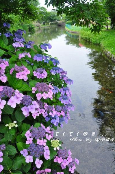 1ひょこたん_9591
