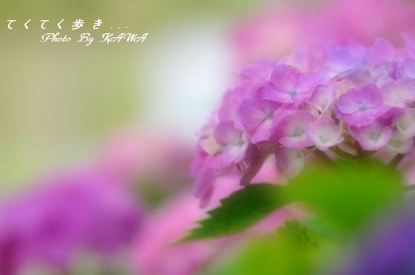 6ひょこたん_9034