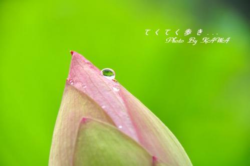 2浄瑠璃寺_9702