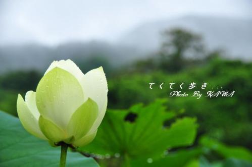 4浄瑠璃寺_9688