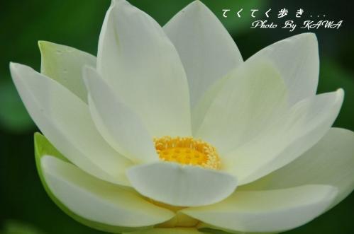 5浄瑠璃_9268