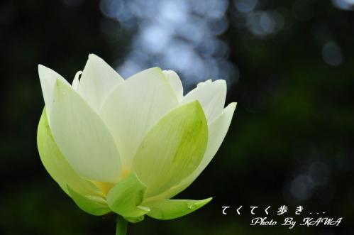 6浄瑠璃_9258