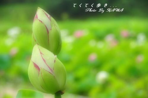 7浄瑠璃寺_9714