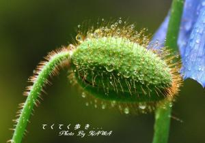 5皿ヶ嶺_9752