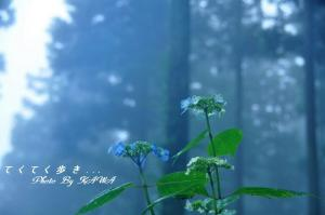 6皿ヶ嶺_9780