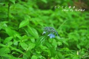 7皿ヶ嶺_9774