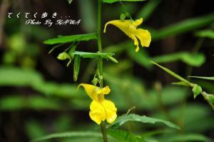 2キツリフネ_9816