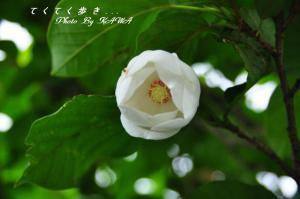 19姫鶴荘_0129