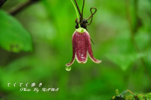 6ハンショウヅル天狗10.06.27