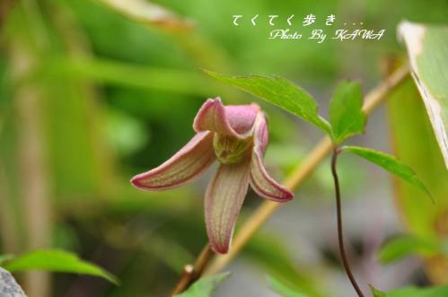 7ハンショウヅル2天狗10.06.27