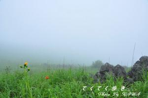 3ヒメユリ_0898