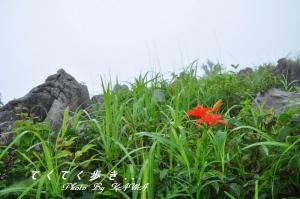 4ヒメユリ_0902