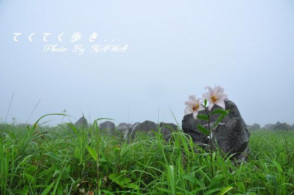 8ササユリ_0904