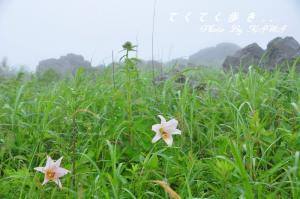 10ササユリ_0918