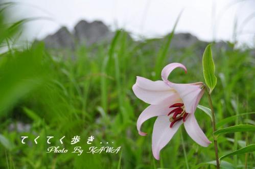 11ササユリ_1048