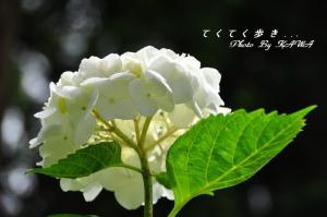 10風穴_1153