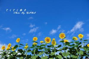 4上林_2038