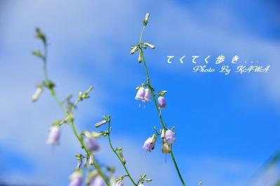 3ツリガネニンジン皿ヶ嶺10.08.06