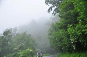 1林道沿いノリウツギ