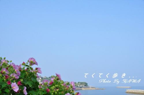 3フヨウ双海