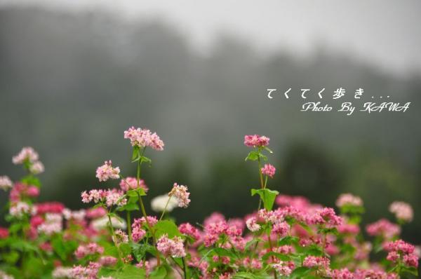 8アカソバ10.10.09