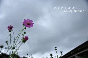 6見奈良10.10.09