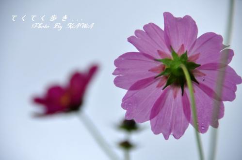 8見奈良10.10.09