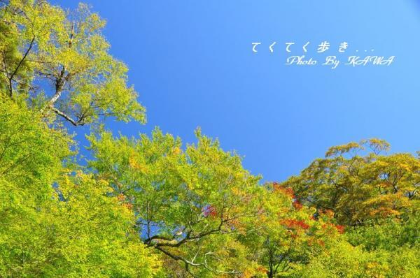 3大川嶺10.10.16