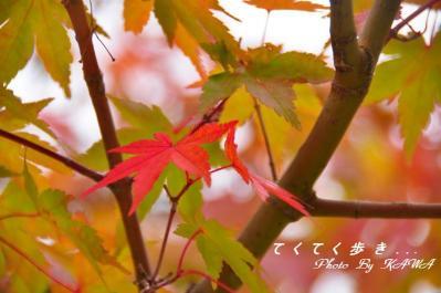 4小田深山10.10.30