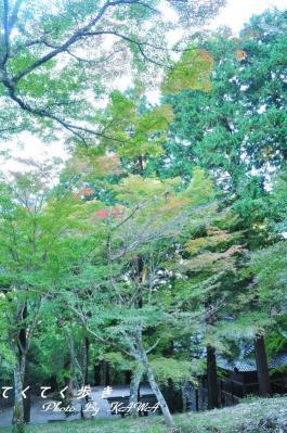 3稲荷山10.11.03