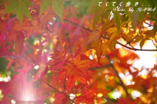 14高縄山10.11.03