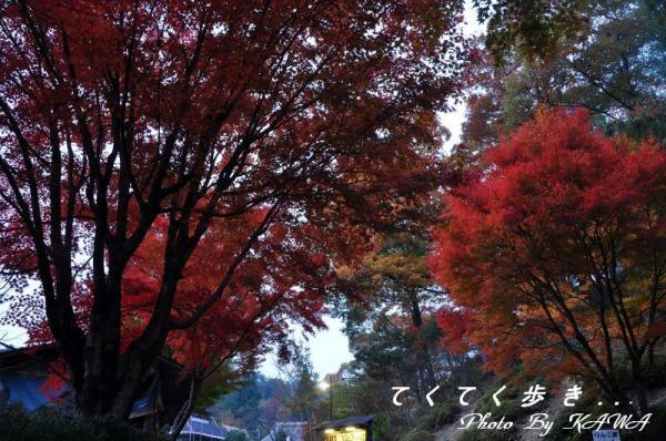 5ふるさと村2010.11.13