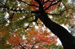 7稲荷山10.11.13