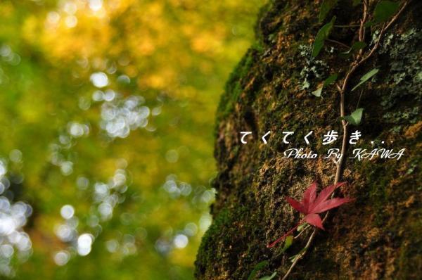8稲荷山10.11.13