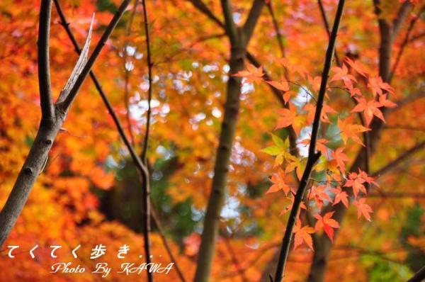 9稲荷山10.11.13