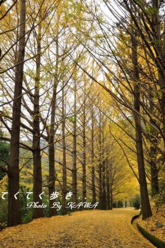 1イチョウ2010.11.14