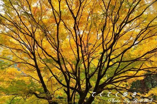 6滑川2010.11.14