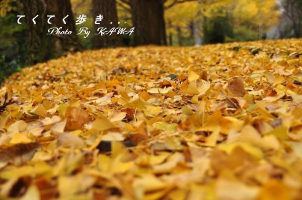 1桜三里10.11.14