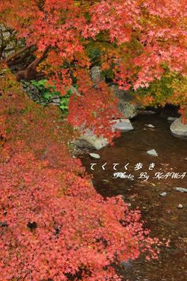 2白滝10.11.21
