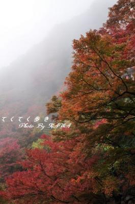 3白滝10.11.21