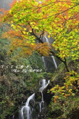 4白滝10.11.21