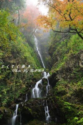5白滝10.11.21
