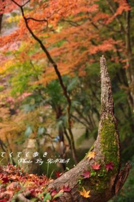 9白滝10.11.21