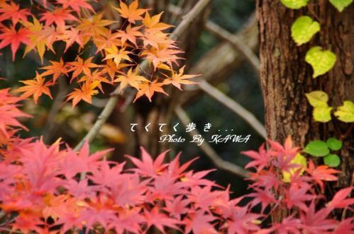 7塩ヶ森10.11.23