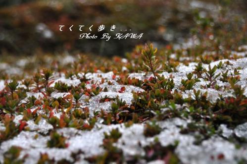 7緑化10.12.26