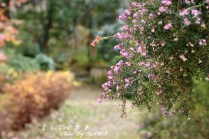 7緑化11.01.15
