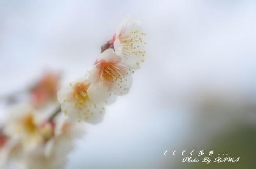 5志島ヶ原11.02.19