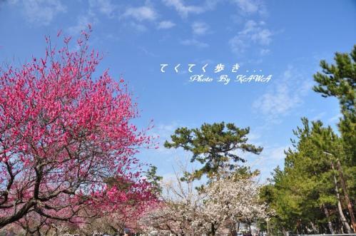 1桜井11.02.27