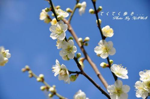 3桜井11.02.27
